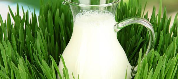 здоровое молоко